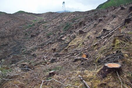 environmentalism: clearcut forest