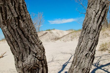 sand dunes through a tree