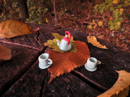 forest tea: Tea drinking in the forest
