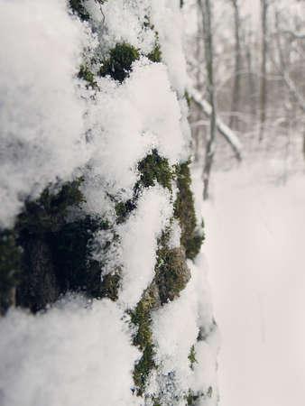 frozen trees: Winter frozen trees - winter landscape Stock Photo