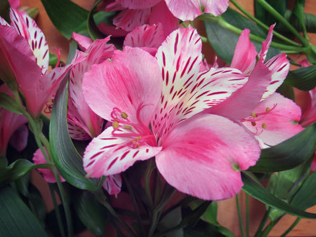 alstroemeria: Alstroemeria flowers bouquet