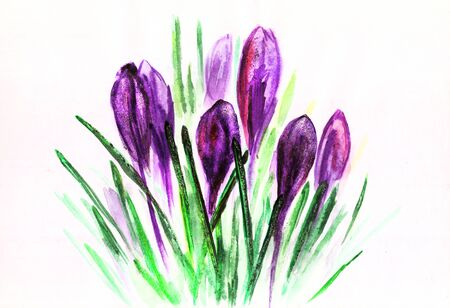 Watercolor purple tulips with green leaves drawing at white paper background, painted flowers, decorative floral background, hand drawn natural template