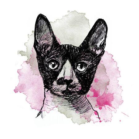 Cat portrait on white