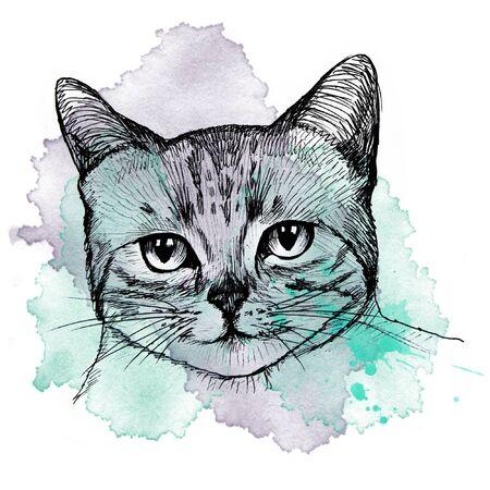 Cat portrait Archivio Fotografico