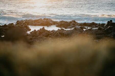 Rocky shore of the ocean with the green plants on the front on the sunset lights. Tenerife