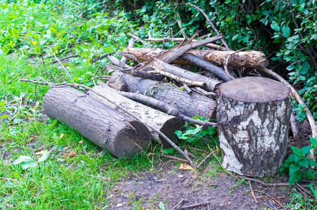 tree logs on the grass at summer. background, nature.