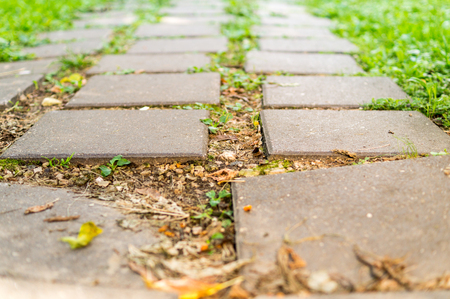 path of concrete tiles in garden at summer. background.