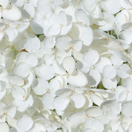 seamless white hydrangea flowers at summer. background, nature.