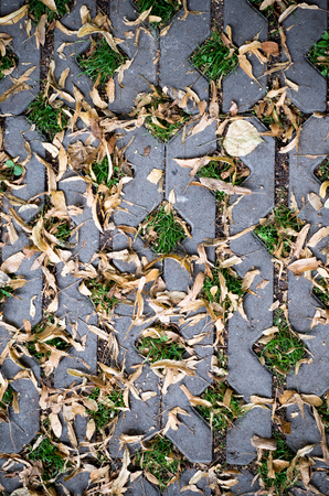 green grasses in  holes of paving blocks with yellow seeds at autumn. background, pattern, texture. Standard-Bild