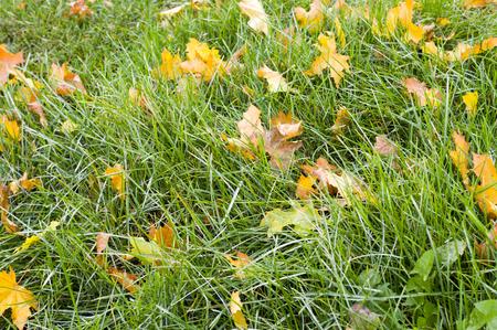 hierba verde con fondo de hojas de otoño. naturaleza, estacional