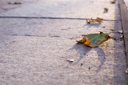 sidewalk with border in the park at autumn. background, urban. Reklamní fotografie