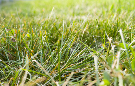 green grass background with perspective. nature, texture.