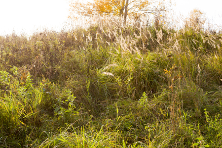 hill with grass and tree at autumn. close, nature.
