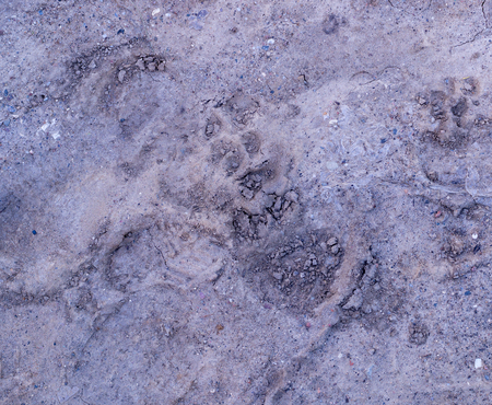 dog paw prints in the soft dirt. background, natural.