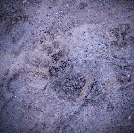 vignetted dog paw prints in the soft dirt. background, natural.