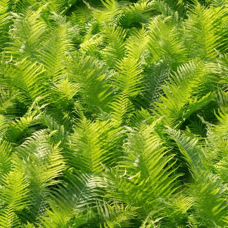 seamless green fern leaves at summer. nature, texture Reklamní fotografie