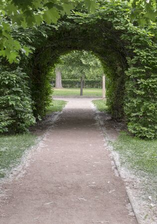 green bushy arch in the park at summer. background, nature.