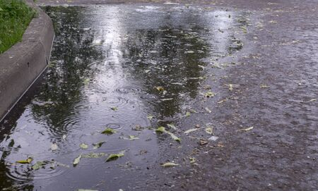 leaves and ripples on the puddle at rain in the summer park. background, nature. Stock Photo