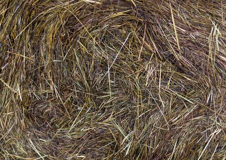 Wet hay harvest texture at rainy day. Reklamní fotografie