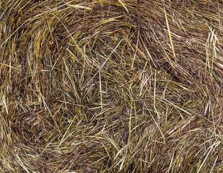 wet hay harvest texture at rainy day. background, agricultural. Reklamní fotografie