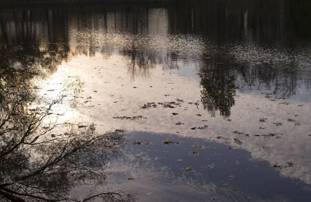 lake with reflections and fallen leaves at sunset in city park during autumn. nature, seasonal
