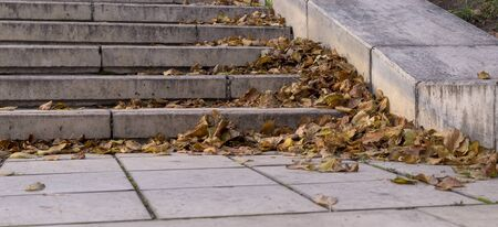 yellow autumn leaves on stone stairs of city park. background, seasonal.