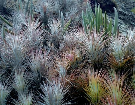 macro in plants of low bearing