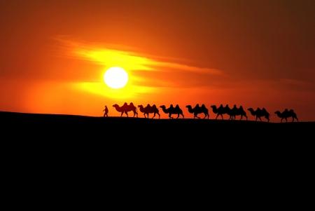 xinjiang: caravane chameau avec coucher de soleil