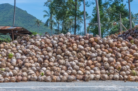 Stack Schale Der Kokosnuss Trocknen Aus Kokosöl Für Industrie