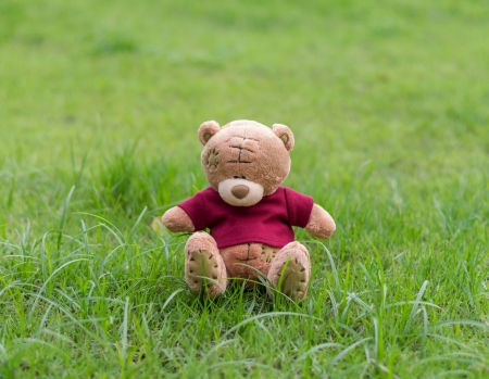 TEDDY BEAR brown color with red shirt sitting on grass Banco de Imagens