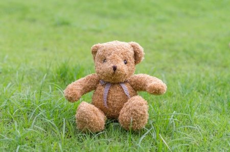 TEDDY BEAR brown color sitting on grass