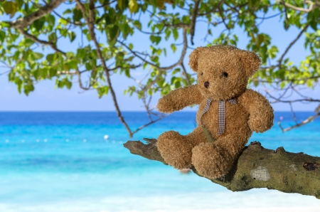 TEDDY BEAR brown color sitting on the tree with sea beach background Banco de Imagens