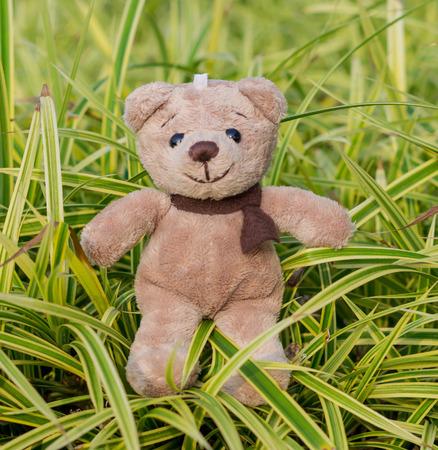 TEDDY BEAR brown color with scarf on ornamental plants Banco de Imagens