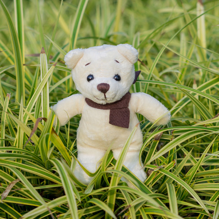 TEDDY BEAR yellow, color with scarf on ornamental plants