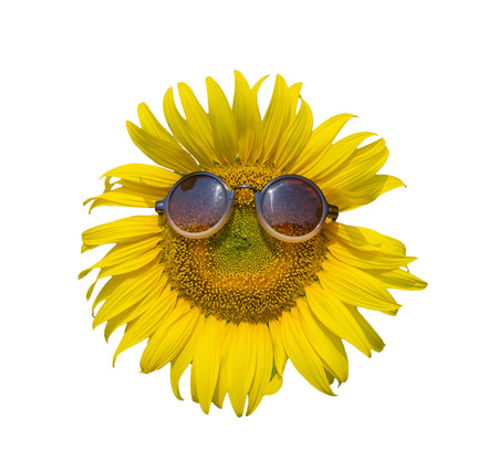energize: Sunflower with sunglasses on white background, isolate