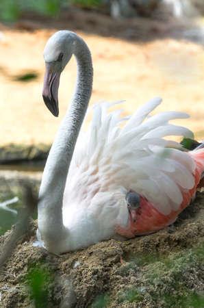 chilika: Baby Egret