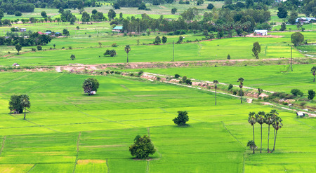Landscape of the paddy rice field photo