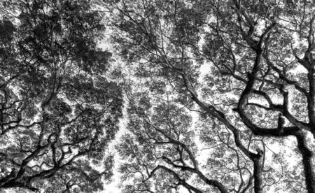 extreme angle: Branch of tree in Black and white