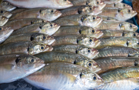 fishy: Many of fresh fish seafood in indoor market background Stock Photo