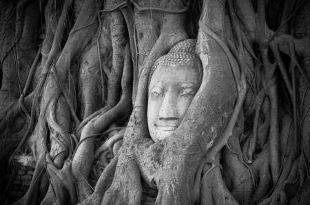 cabeza de buda: Cabeza de Buda de piedra de arena en un árbol en Wat Mahathat, Ayutthaya, Tailandia, templo pública