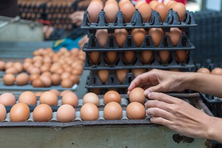 manufacturing: Chicken Farm Machine, production line process Stock Photo