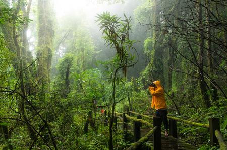 luz natural: Viajeros que toma la foto en el bosque tropical hermosa en ang rastro ka naturaleza en el parque nacional Doi Inthanon, Tailandia Foto de archivo