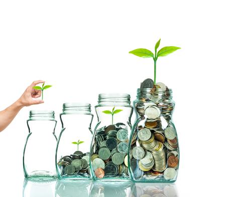 caja fuerte: D� poner la planta en botella transparente sobre fondo blanco, el concepto de crecimiento de la inversi�n de negocios