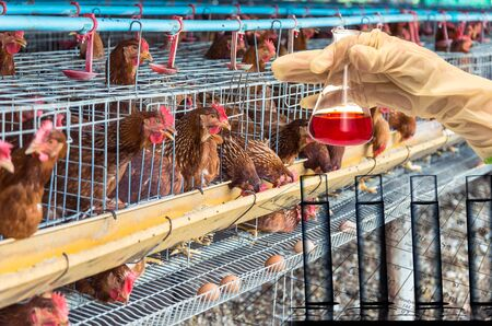 scientific farming: egg chicken farm with Chemical Laboratory, Hand holding the tube with test flask