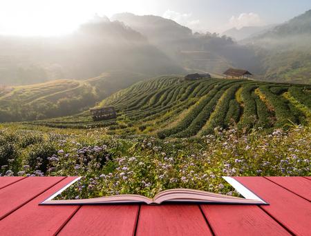 imagen: Imagen Abra el libro de Campo del t�, cuando el amanecer con niebla, Doi Angkhang, provincia de Chiang Mai, Tailandia Foto de archivo