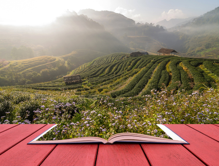publishing: Open book image of Tea field when sunrise with fog, Doi angkhang, Chiangmai province, Thailand