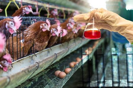 granja avicola: huevo granja de pollos con Laboratorio Químico, Mano sosteniendo el tubo con el frasco de prueba