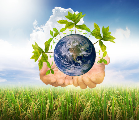 earth with seed over the hands on rice filed and blue sky with cloud background. environment concept. Elements of this image furnished by NASA. green world concept