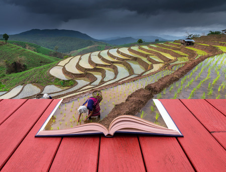 green fields: Open book image of Unidentified Mountaineer planting rice by transplanting rice seedlings