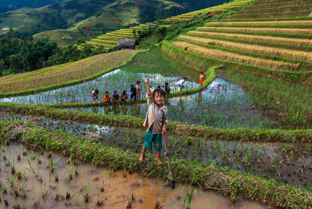 vietnamese ethnicity: MU CANG CHAI - SEP 25 : Undefined Childrens playing in rice terrace on september 25, 2015 at mam xoi of mu cang chai,Yenbai, Vietnam. Mu Cang Chai is famous for its rich traditional cultural art values such as its traditional dances, dishes and Sai San fe Editorial